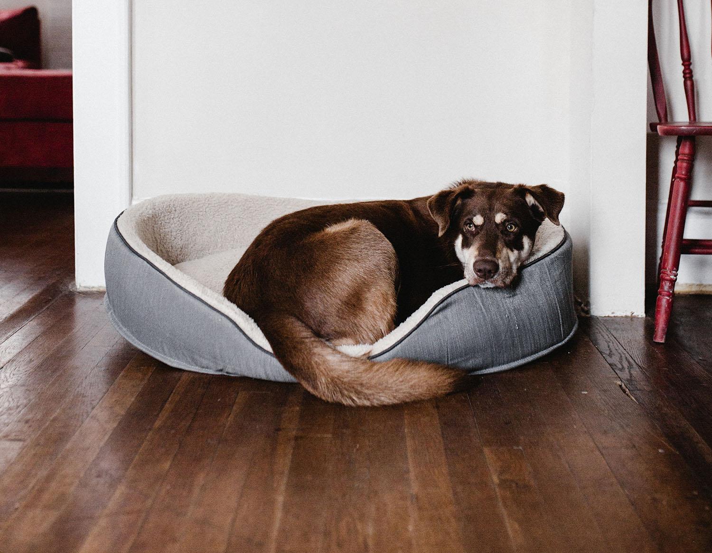 Un chien allongé dans son panier