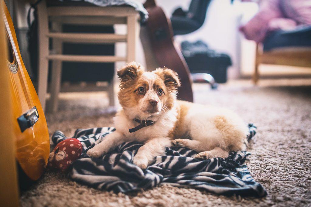 Un petit chien dans un salon