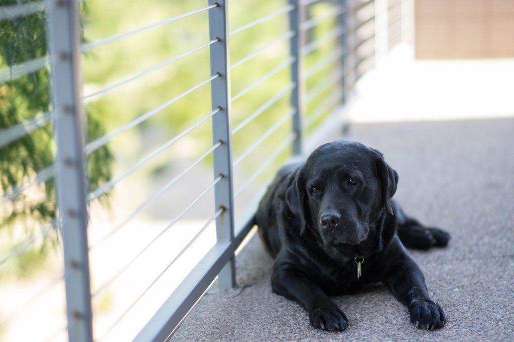 Un chien noir sur un balcon