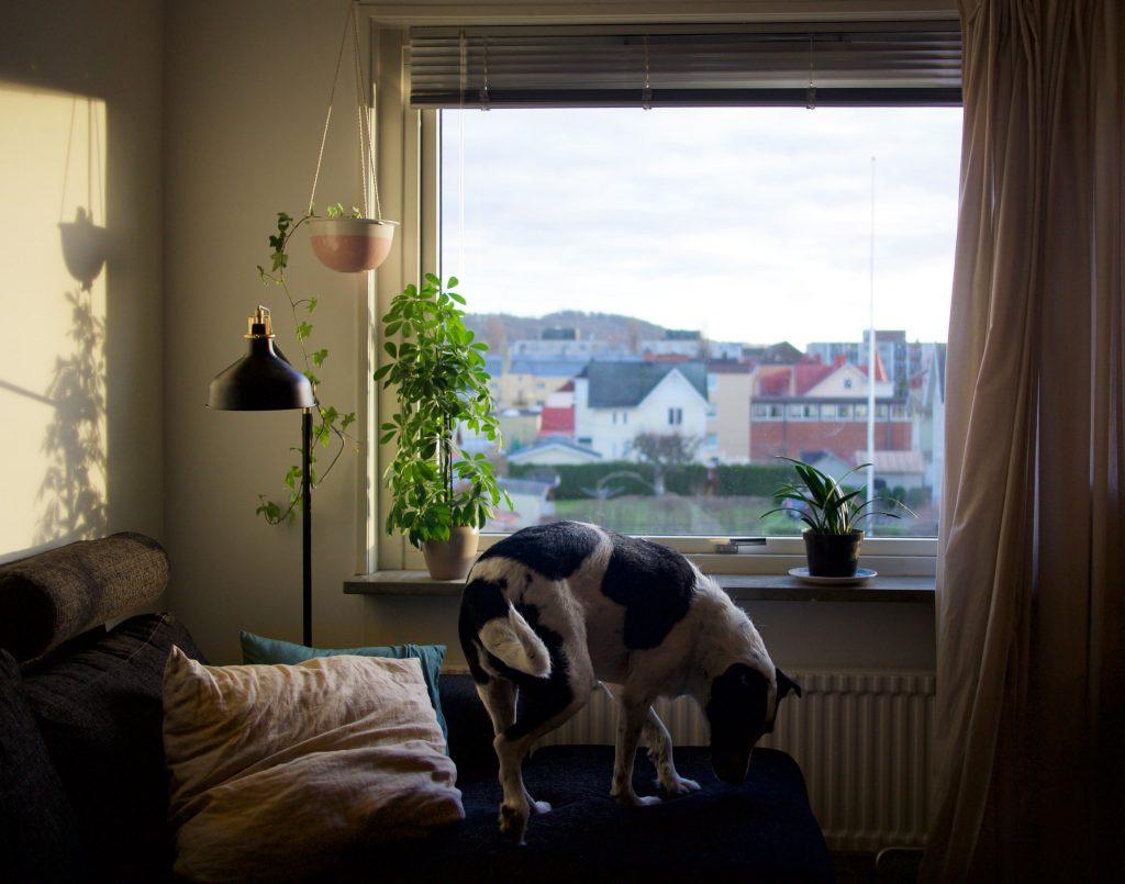 Un chien dans un appartement